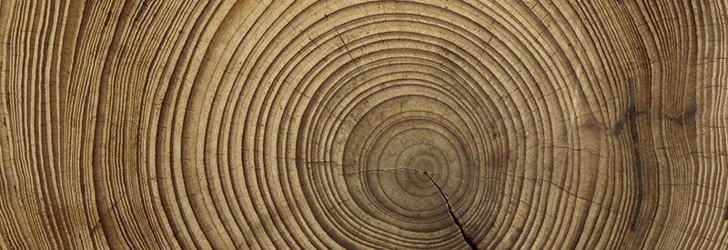 La magia del legno di edgardo horak il giornale di for Hobby del legno