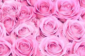 weekend-rosa-free-yoga-gratuito-essere-benessere-alassio-laigueglia-lucia-ragazzi-